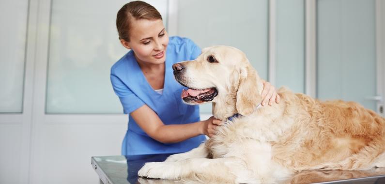 Bliv hundemassør